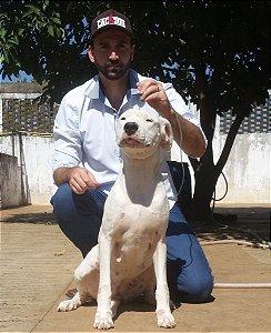 Laka - Dogo Argentino
