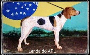 FILHOTES DA LENDA  LENDA X GUARA