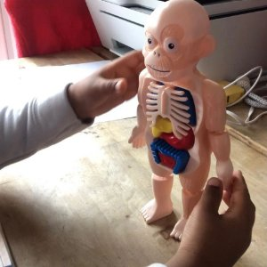 Quebra cabeça 3d corpo humano (José)