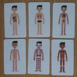 Flashcards de ciências para atividades pedagógicas - Corpo Humano