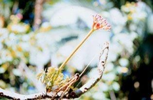 Cicatriz - Essência Floral - Regeneração