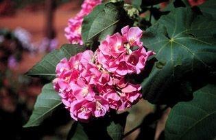 Flor do Mel - Essência Floral -  Carência afetiva
