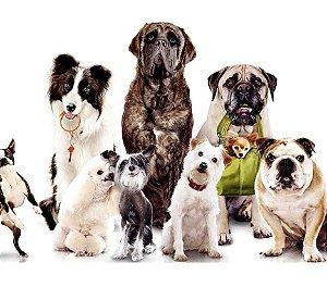 Capa Fitness Cachorros