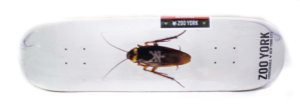 "Shape Marfim Zoo York Cockroach 7.75"" + Lixa Gratis"