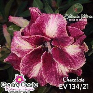 Rosa do Deserto Enxerto - EV-134