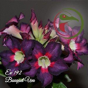 Muda de Enxerto - EV-192 - Uva - Flor Simples