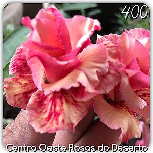 Rosa do Deserto Muda de Enxerto - EV-400 - Flor Tripla Pêssego Matizada