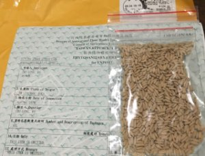 Semente MIX - Lote com 100 sementes