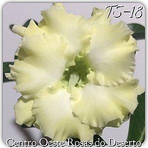Muda de Enxerto - TS-018 - Flor Dobrada Amarelo