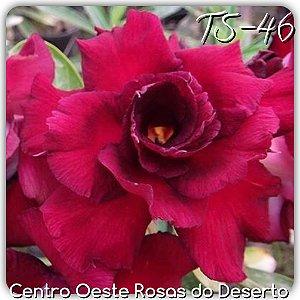 Muda de Enxerto - TS-046 - Flor Tripla Vermelha