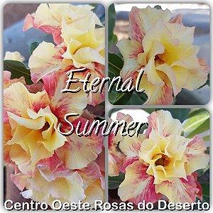 Rosa do Deserto Muda de Enxerto - Eternal Summer - Flor Dobrada Amarela Matizada