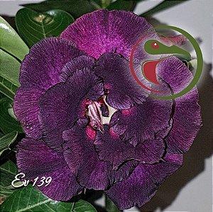 Muda de Enxerto - EV-139 - Flor Dobrada
