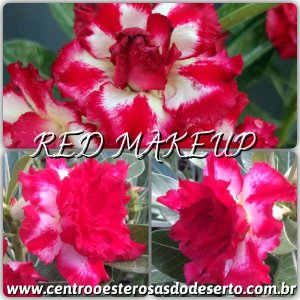 Muda de Enxerto - Red Makeup - Flor Tripla IMPORTADA