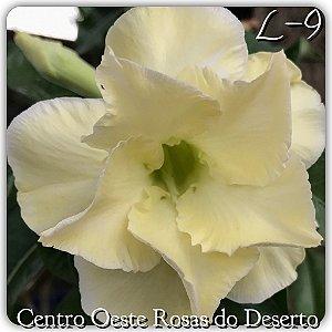 Rosa do Deserto Muda de Enxerto - L-09 - Flor Dobrada Amarelo Claro