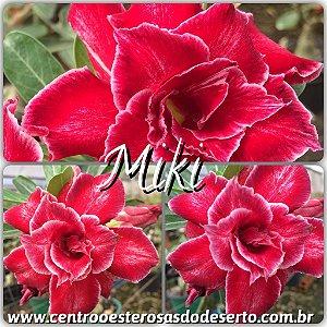 Rosa do Deserto Muda de Enxerto - Miki - Flor Dobrada
