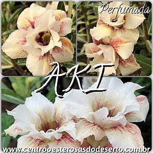 Rosa do Deserto Muda de Enxerto - AKI - Flor Dobrada Perfumada