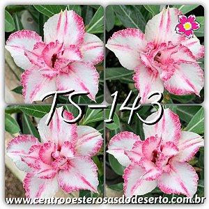 Muda de Enxerto - TS-143 - Flor Dobrada