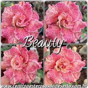 Muda de Enxerto - Beauty - Flor Dobrada Importada