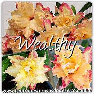 Muda de Enxerto - Wealthy - Flor Tripla Importada