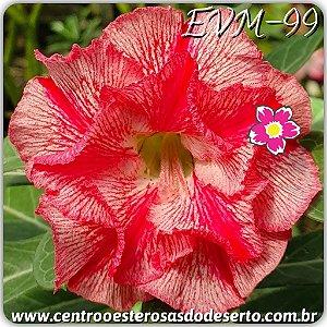 Muda de Enxerto - EVM-099 - Flor Dobrada