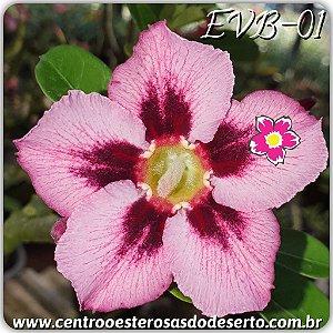 Muda de Enxerto - EVB-001 - Flor Simples