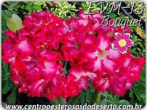 Muda de Enxerto - EVM-013 - Flor Dobrada - Bouquet