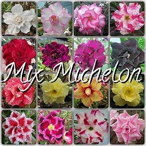 Semente Multi-Petals Mixed Coleção Michelon - Kit com 10 sementes