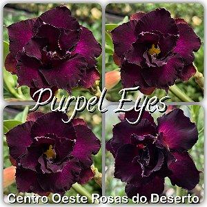 Rosa do Deserto Muda de Enxerto - Purple Eyes - Flor Dobrada - Cuia 21 (2 a 3 enxertos)