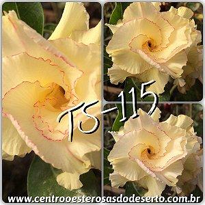 Muda de Enxerto - TS-115 - Flor Dobrada
