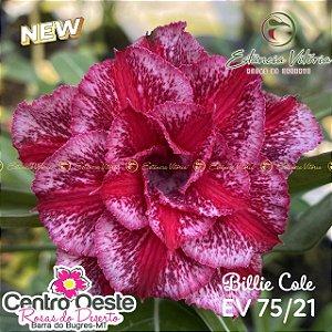 Rosa do Deserto Enxerto EV-075 Billie Cole