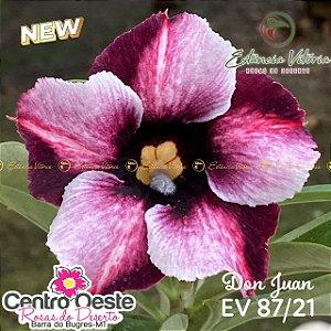 Rosa do Deserto Enxerto EV-087 Don Juan