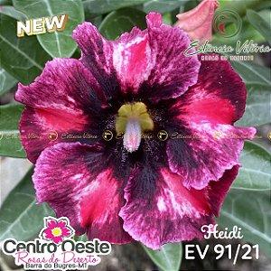Rosa do Deserto Enxerto EV-091 Heidi