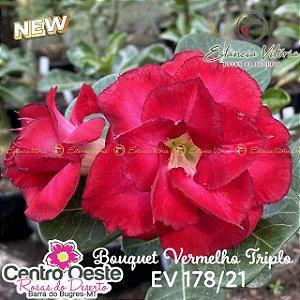 Rosa do Deserto Enxerto EV-178 Bouquet Vermelho Triplo