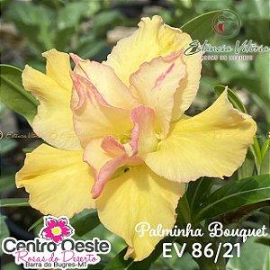 Rosa do Deserto Enxerto - EV-086 Palminha Bouquet