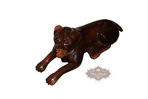 Cachorro Rottweiler em Angelim