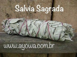 Salvia branca grande
