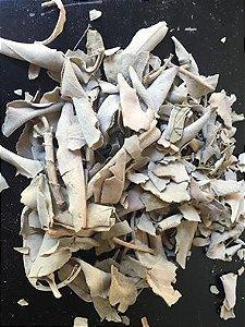 Salvia branca moida pacotes   18 gramas