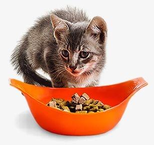 Pote de Ração do Gato - Duas Abas