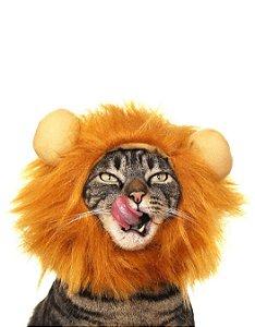 Fantasia Juba de Leão | Para Gatos