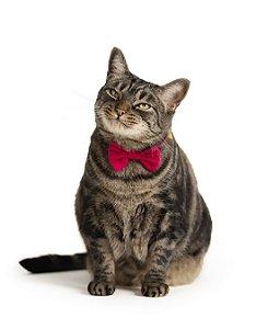 Gravatinha | Para Gatos