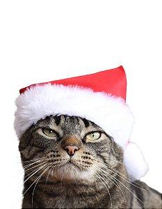 Gorrinho de natal | Para Gatos