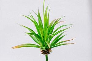 Suculenta artificial folha fina verde