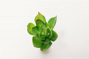 Mini leguminosa verde artificial