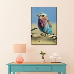 Quadro Decorativo - Pássaro Rolo de peito lilás