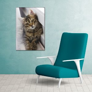 Quadro Decorativo - Gato malhado
