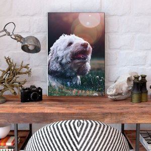 Quadro Decorativo - Cachorro na grama