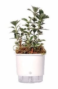 Vaso Auto-Irrigável - pequeno (10,9cm x 9,5cm) - diversas cores