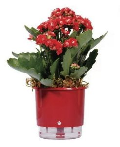 Vaso Auto-Irrigável - médio (11,4cm x 12,6cm) - diversas cores
