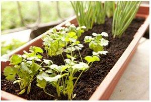 Jardineira - Vaso Jardineira 45 cm