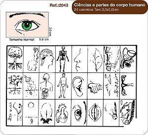 Carimbos Ciencias E Partes do Corpo Humano 24 Unidades